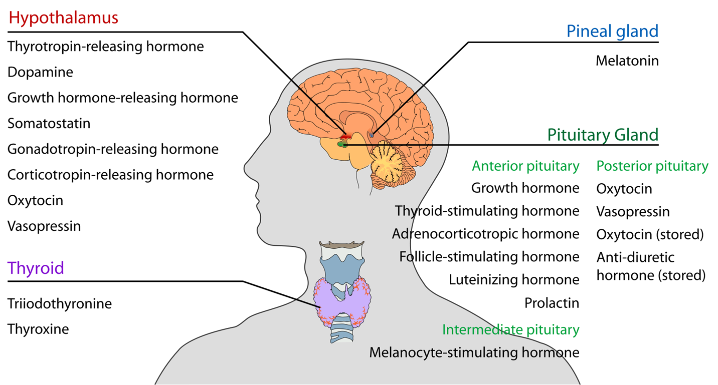 hormones produced in the head and neck