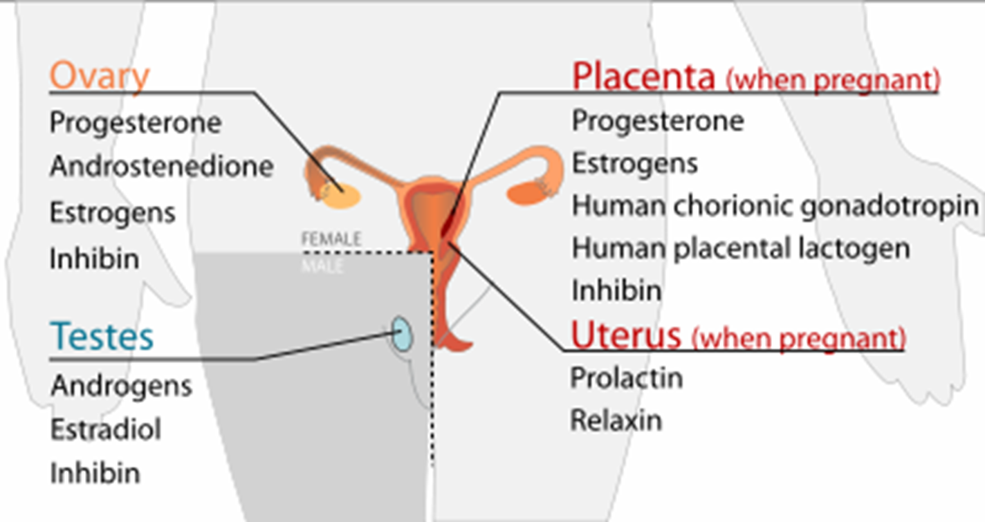 hormones of male and female burghealth